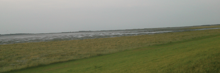 Salt marsh on Borkum